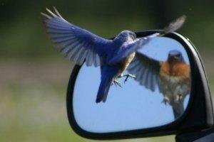 DirektnachrichtenTwitter rüstet Messenger-Funktionen auf